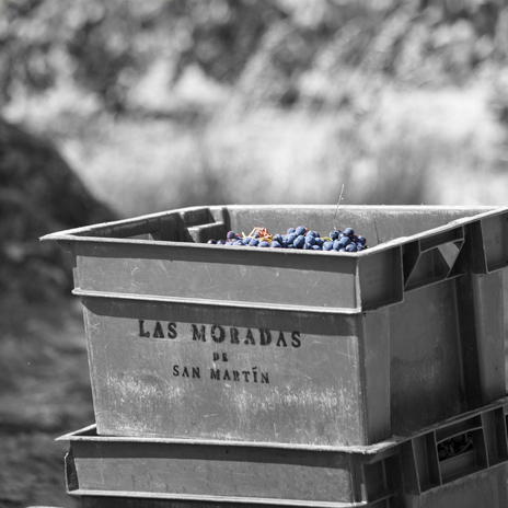 manual-harvest- Las Moradas Garnacha